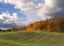 Rural autumn landscape. With green fields Stock Images