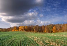 Rural autumn landscape. With green fields Royalty Free Stock Photography