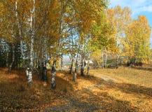 Rural autumn landscape. Mountain village Stock Images