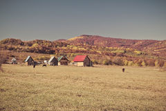 Rural autumn landscape in the mountains . Small houses and horses Royalty Free Stock Images