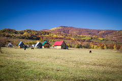 Rural autumn landscape in the mountains . Small houses and horses Royalty Free Stock Image