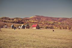 Rural autumn landscape in the mountains . Small houses and horses Royalty Free Stock Photos