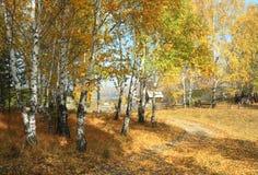Rural autumn landscape. Village well Stock Photos