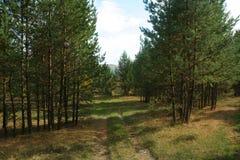 Rural autumn landscape. Village well Stock Image