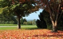 Rural autumn landscape Royalty Free Stock Image