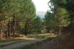 Rural autumn landscape. Village well Stock Images