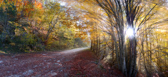 Rural autumn path. Misty deciduous forest in autumn with a path making the way through the beech trees Stock Photo