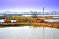 Rural autumn pond scenery Royalty Free Stock Photography