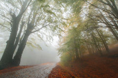 Rural autumn road Stock Photo