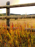 Rural autumn scene Stock Photos