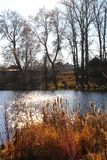 A rural, autumnal landscape on the lake. Stock Image