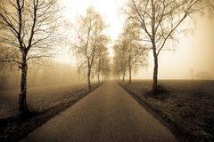 Rural Avenue. In sepia with morning fog royalty free stock image