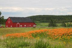 Rural barn and tiger lilies Stock Images