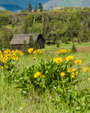 RuraL barn with yellow wildflowers Stock Photography