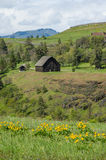 RuraL barn with yellow wildflowers Stock Image