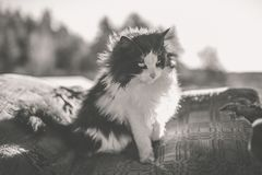 Rural black and white cat Royalty Free Stock Images