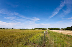 Rural Boundary. A barbed wire fence protects a field of yellow and green crops under a brilliant blue sky in rural America Stock Image