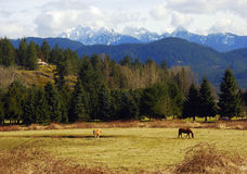 Rural Canadian Country. This rural scene taken from Pitt Meadows, British Columbia. The snow capped Golden Ears Mountains sit prominently waiting for a warmer Royalty Free Stock Image