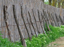 Rural cane fence Royalty Free Stock Photography