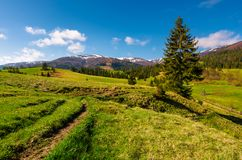 Rural are in Carpathian mountains in springtime. Lovely scenery with rural fields between forest and village outskirts Stock Images