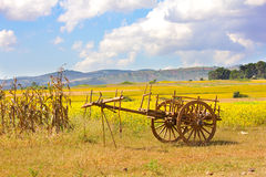 Rural cart on a field of yellow flowers, hills in the background Stock Images