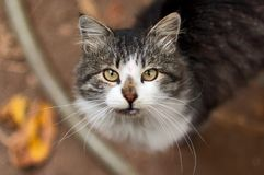 Rural Cat Royalty Free Stock Photo