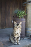 Rural Cat on Porch Stock Photo