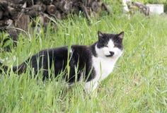 Rural cat. Is posing on camara Stock Photos