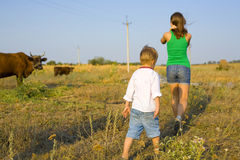 Rural children on a meadow with cows Stock Photography
