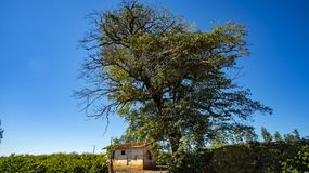 Rural country farmhouse in Brazil. South America stock images