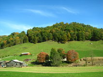 Rural country hillside. A lush green rural hillside with a hint of fall colors in the trees Royalty Free Stock Photography