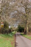 Rural country lane. A quite country lane in springtime Stock Images