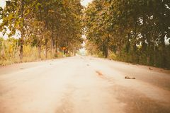 Rural country road amidst green trees. For travelling and transportation concept, added colour filter and vintage style Stock Image