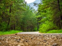Rural Country Road. With trees on both sides royalty free stock photography