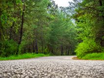 Rural Country Road. With trees on both sides stock photography