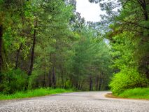 Rural Country Road. With trees on both sides royalty free stock image