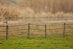 A rural country scene with a wooden fence, green grass, yellow wildflowers, a duck swimming and a blurred background. Stock Images
