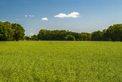 Rural. Country side - field with fresh green colors; trees on horizon; clear sky Royalty Free Stock Photography
