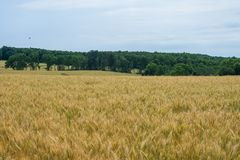 Rural Country York County Pennsylvania Farmland, on a Summer Day stock images