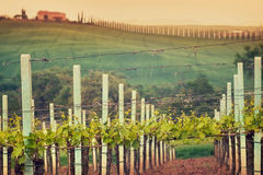 Rural countryside in Italy region of Tuscany Stock Photography