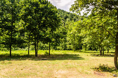 Rural Countryside Landscape Stock Photography
