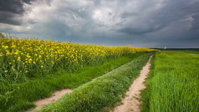 Rural countryside with path and green yellow field at stor, Time lapse stock video