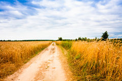 Rural Countryside Road Through Fields With Wheat Stock Photo
