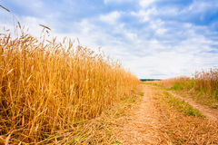 Rural Countryside Road Through Fields With Wheat Royalty Free Stock Photography
