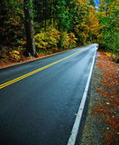 Rural countryside road through a forest Royalty Free Stock Photo