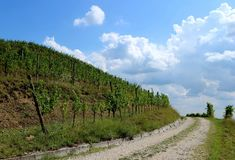 Rural countryside road between vineyards. Clouds at the end of the way. Royalty Free Stock Photo