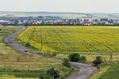 Rural countryside road between yellow sunflower fields and small royalty free stock images