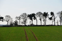 Rural countryside view. Line of trees in farming field royalty free stock photo