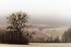 Rural Countryside Winter Landscape in Bavaria Royalty Free Stock Photography