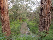 Rural creek through bush and wetland stock image